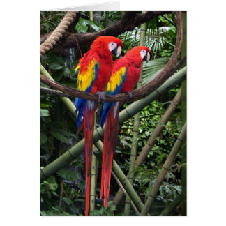 red macaws card