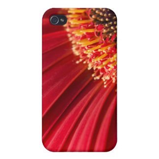 Red Macro Gerbera Daisy Flower iPhone 4/4S Covers