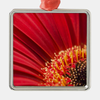 Red Macro Gerbera Daisy Flower Silver-Colored Square Decoration