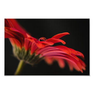 Red Macro Gerbera Flower Art Photo