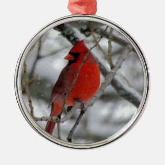 Red male cardinal in the winter christmas ornament