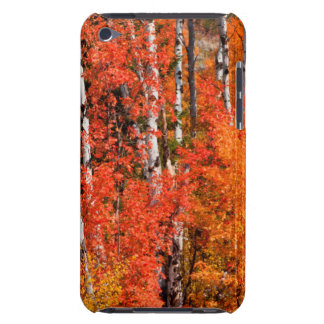 Red Maple (Acer Rubra) And Aspens Barely There iPod Covers