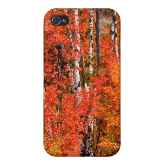 Red Maple (Acer Rubra) And Aspens iPhone 4 Cover