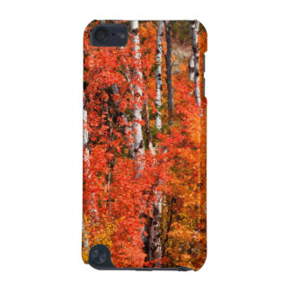 Red Maple (Acer Rubra) And Aspens iPod Touch 5G Case
