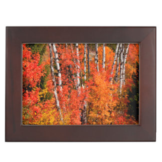 Red Maple (Acer Rubra) And Aspens Keepsake Box