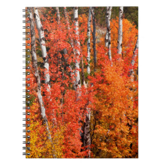 Red Maple (Acer Rubra) And Aspens Notebooks
