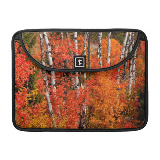 Red Maple (Acer Rubra) And Aspens Sleeve For MacBook Pro