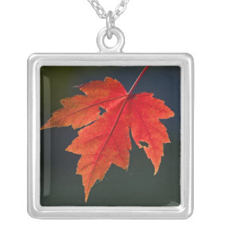 Red Maple Acer rubrum) red leaf in autumn, Silver Plated Necklace