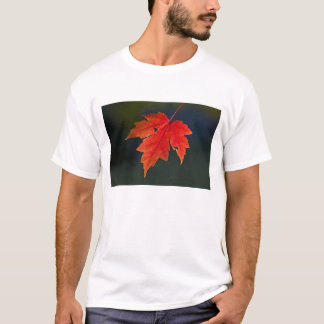 Red Maple Acer rubrum) red leaf in autumn, T-Shirt