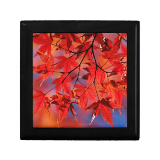 Red Maple Autumn Leaves Trinket Boxes