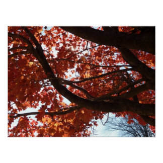 Red Maple Branches Autumn Colorful Poster