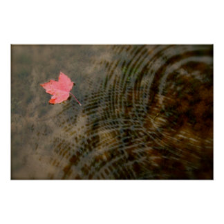 Red Maple Floating Poster