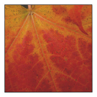 Red Maple Leaf Abstract Autumn Nature Photography