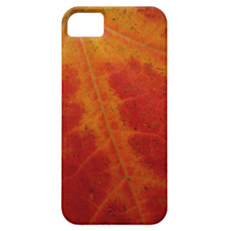 Red Maple Leaf Abstract Autumn Nature Photography Barely There iPhone 5 Case