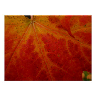 Red Maple Leaf Abstract Autumn Nature Photography Poster