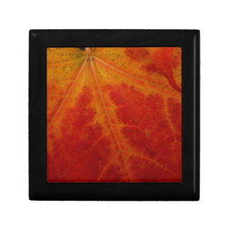 Red Maple Leaf Abstract Autumn Nature Photography Small Square Gift Box