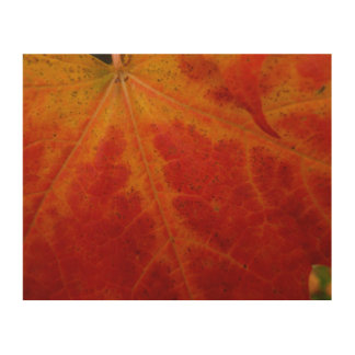 Red Maple Leaf Abstract Autumn Nature Photography Wood Print