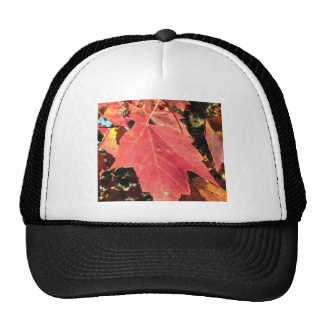 RED MAPLE LEAF IN AUTUMN CAP