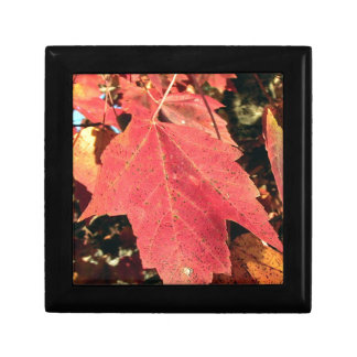 RED MAPLE LEAF IN AUTUMN SMALL SQUARE GIFT BOX