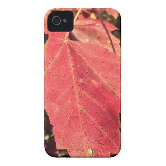 RED MAPLE LEAF IN AUTUMN iPhone 4 COVERS
