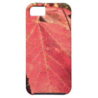RED MAPLE LEAF IN AUTUMN iPhone 5 CASE