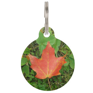Red Maple Leaf on Grass for Canada Day Pet Tag
