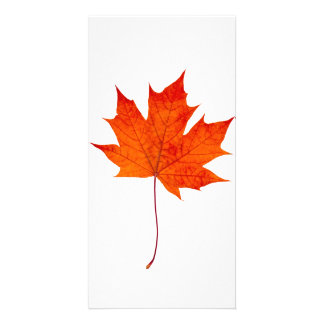 Red maple leaf personalized photo card