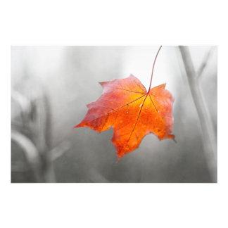 Red Maple Leaf - Velvet Autumn Art Photo