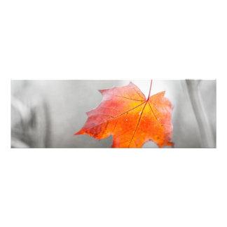 Red Maple Leaf - Velvet Autumn Photo