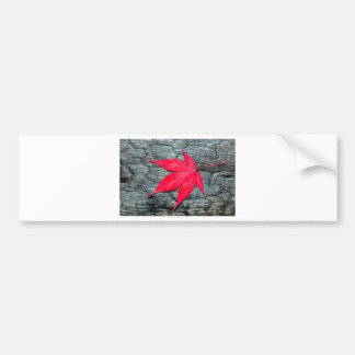 Red maple leave on black burnt wood bumper sticker