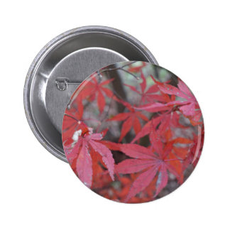 red maple leaves 6 cm round badge