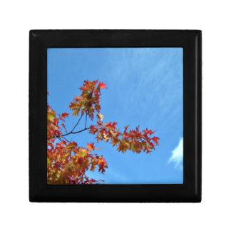 Red maple leaves against blue sky keepsake boxes