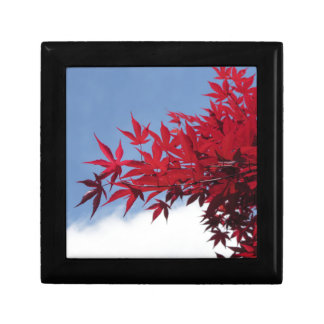 Red maple leaves against the blue sky small square gift box