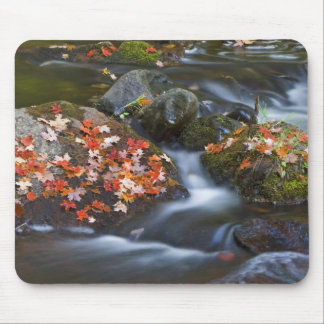 Red maple leaves carpet the rocks in the mouse pad