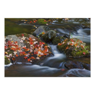 Red maple leaves carpet the rocks in the poster