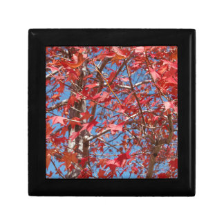 Red Maple Leaves Gift Boxes