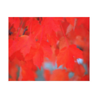 Red Maple Leaves in Autumn Stretched Canvas Print