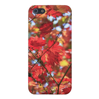 Red Maple Leaves in the Fall Case For iPhone 5/5S