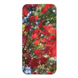 Red Maple Leaves in the Fall iPhone 5 Case
