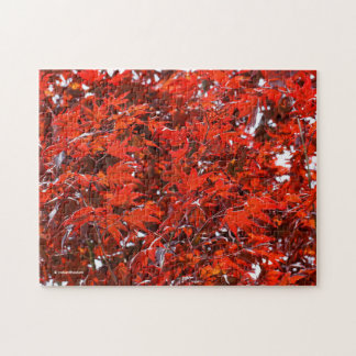 Red Maple Leaves Jigsaw Puzzle