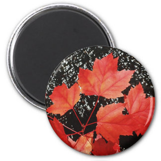 Red Maple Leaves Magnet