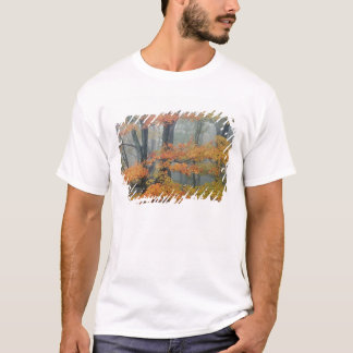 Red Maple tree, Acer rubrum, portrait in foggy T-Shirt