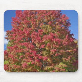 Red Maple tree in autumn colors, near Concord, Mouse Pad