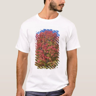 Red Maple tree in autumn colors, near Concord, T-Shirt