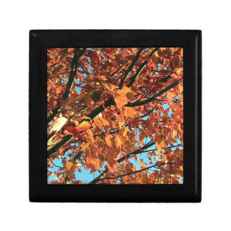 RED MAPLE TREE IN AUTUMN FALL SMALL SQUARE GIFT BOX