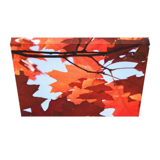 Red maple tree photo canvas print