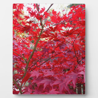 Red Maple Tree Plaque