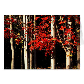Red Maples in Autumn Splendor Greeting Card