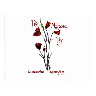 Red Marisposa Lily Postcard