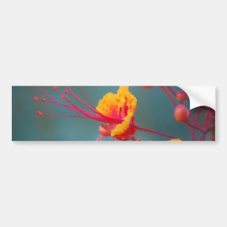 Red Mexican Bird of Paradise Bumper Sticker
